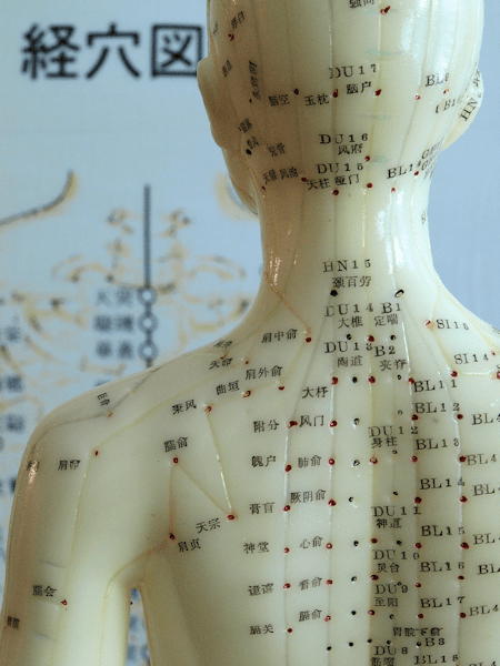 Acupressure Points Chart Chest and Acupuncture Model Neck
