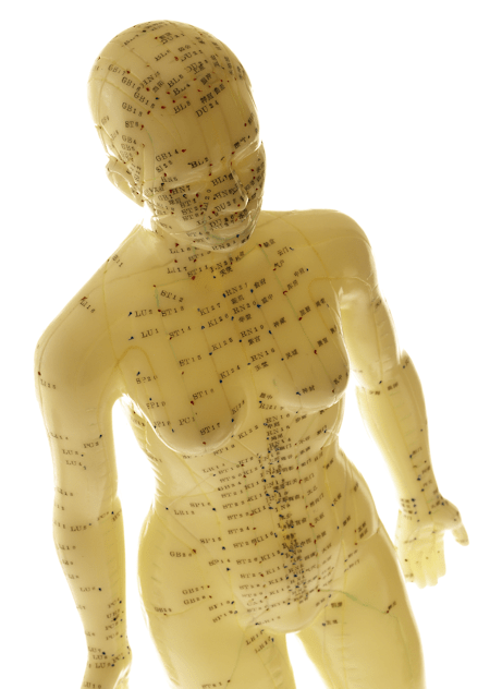 Woman Acupressure Model whole body front