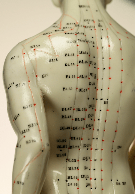 Acupressure points model back Bladder meridians