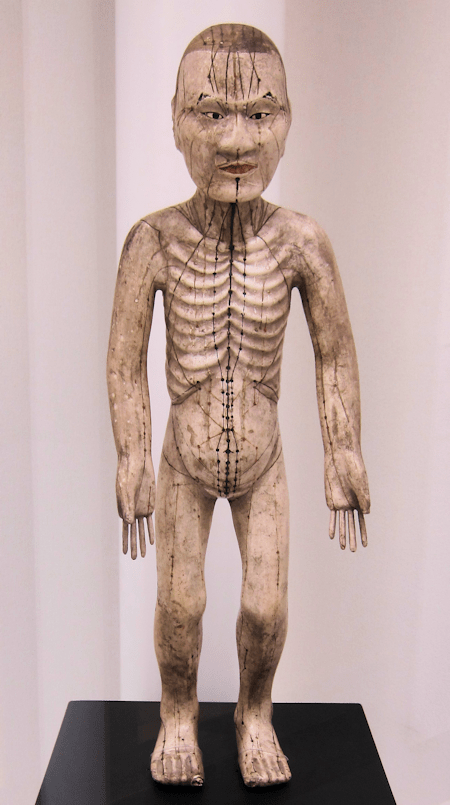 Japanese Acupuncture Model showing acupuncture meridians and points
