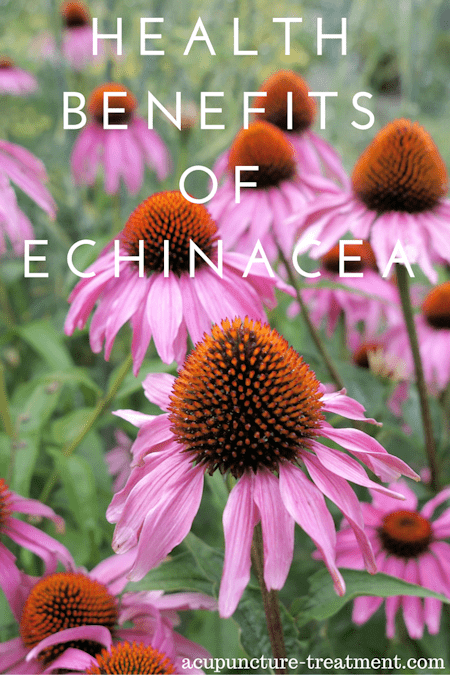Health Benefits of Echineacea Plant