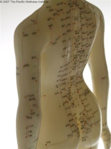 Female Acupuncture Point Model - Back and Hip