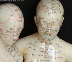 Head acupuncture point model - Male and female faces