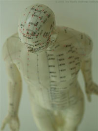 acupuncture history - male acupuncture model